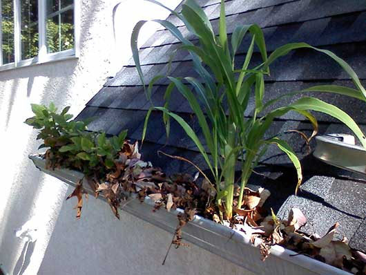 Gutter Cleaning / Lehigh Valley, PA